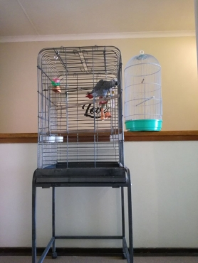Parrot cage and smaller bird cage