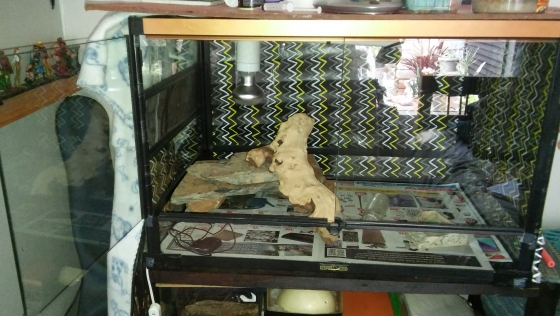 reptizoo reptile enclosure cage