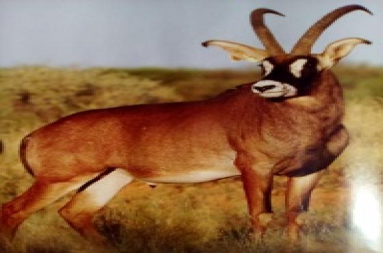Wildlife & Security Estate, Woodland Hills, Bloemfontein