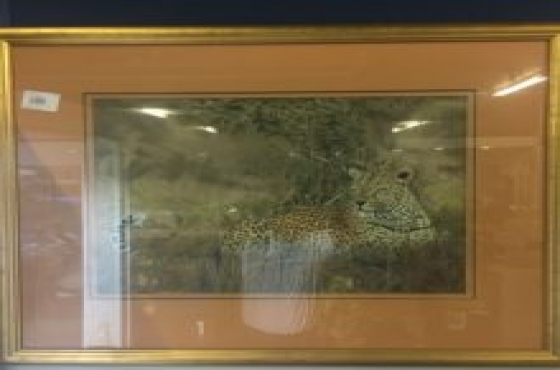 Cheetah resting pict