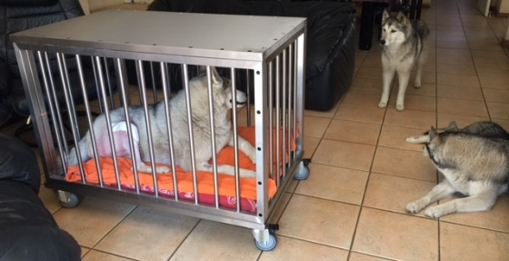 Post-Operative Protective Dog Cage