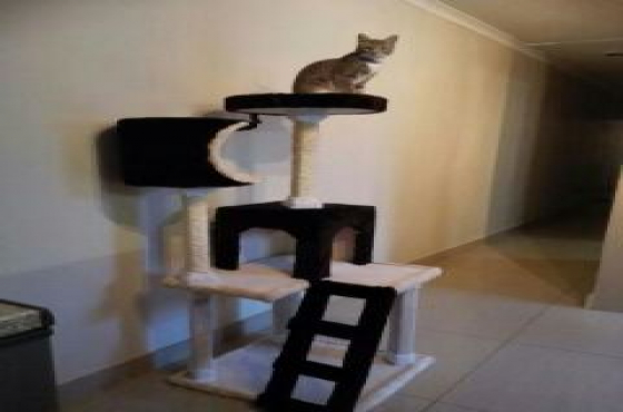 Brand New Cat Condos, Only R850.00, 4 left