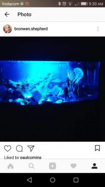 100l Fish tank & accessories