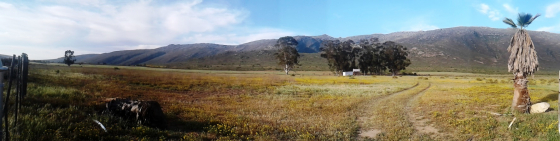 Beautiful small, ll hectare farm available in Aurora near the west coast