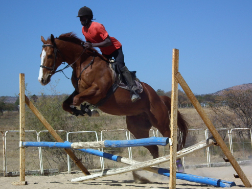 Stunning and very talented tb gelding