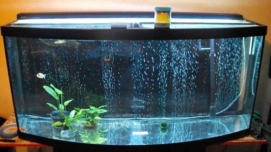 Bow Fish tank W 100cm x H 55cm x L 170cm