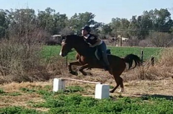 Arab X gelding looking for love
