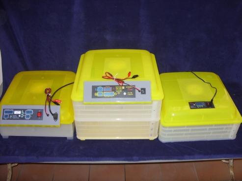 Quail Incubators. Automatic Digital